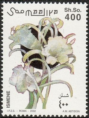Гименокаллис Hymenocallis  iplantsru