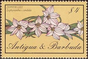 Интернетмагазин семян саженцев и удобрений для садовых